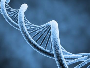 Dna a quadrupla elica 370x280 - Dimostrazione della trasmissione del parvovirus B19 in pazienti con difetti della coagulazione trattati con concentrati di fattori della coagulazione nell'era degli screening con le tecnologie NAT