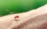 """shutterstock 259036271 153x97 - Misure di prevenzione della trasmissione trasfusionale del West Nile Virus (WNV)"""" per la stagione estivo-autunnale 2013"""