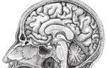 brain Haemosafety 153x97 - variante CJD - 18 anni di ricerca e di sorveglianza