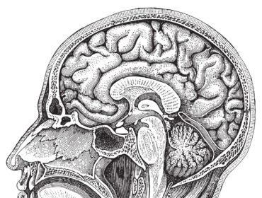 brain Haemosafety 370x280 - variante CJD - 18 anni di ricerca e di sorveglianza