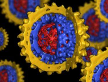 epatite b 64stvr0wa1l7g3311fih45qrcuivla5k9p64k1dit4m 370x280 - Stima dei rischi trasfusionali emergenti: l'esempio dell'infezione del virus dell'HEV