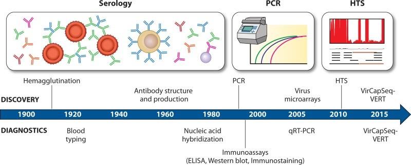 diagnostica - Le nuove tecniche di biologia molecolare ampliano l'esplorazione del mondo dei virus