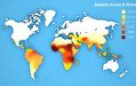 malaria Haemosafety 153x97 - Malaria: l'attuale rischio trasfusionale e le strategie di prevenzione, in particolare nei paesi endemici