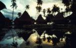 02C29748 153x97 - La siero prevalenza degli arbovirus in Polinesia Francese