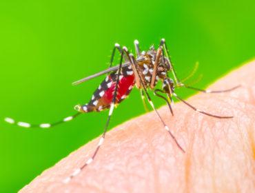 shutterstock 667281064 370x280 - Aggiornamenti emergenza Zika virus: le molteplici modalità di trasmissione