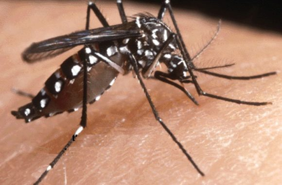 zanzara anofele 2 580x380 - Bambina di 4 anni deceduta di malaria presso gli Spedali Civili di Brescia