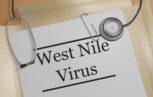west nile virus 153x97 - Stato dell'arte: La sorveglianza della circolazione del West Nile Virus in Italia e metodi precoci di prevenzione del rischio di trasmissione attraverso le trasfusioni