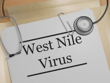 west nile virus 370x280 - Stato dell'arte: La sorveglianza della circolazione del West Nile Virus in Italia e metodi precoci di prevenzione del rischio di trasmissione attraverso le trasfusioni