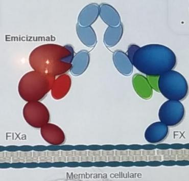 haven1 370x354 - Documentato il primo caso di un inibitore netraulizzante l'emicizumab in un paziente arruolato nello studio Haven