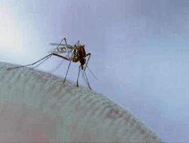 zanzara 1 370x280 - Keystone virus: documentato il primo isolamento nell'uomo. un altro Arbovirus endemico?
