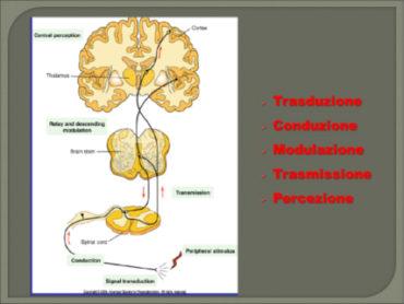 1 1 370x278 - La complessità nella comprensione e nell'approccio terapeutico del dolore nei pazienti con emofilia
