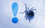 malattia zecche zecca lyme 27228 153x97 - Infezione da virus Crimea-Congo in Spagna. Le raccomandazioni per chi viaggia