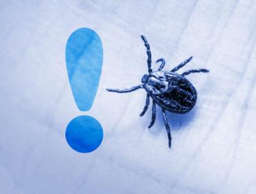malattia zecche zecca lyme 27228 370x280 - Infezione da virus Crimea-Congo in Spagna. Le raccomandazioni per chi viaggia