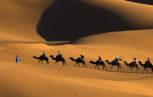 artsfon.com 85852 153x97 - La malattia da prioni nei cammelli in Algeria