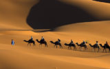 artsfon.com 85852 160x100 - La malattia da prioni nei cammelli in Algeria