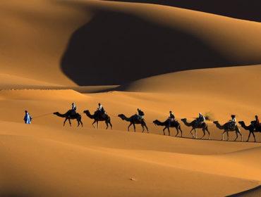artsfon.com 85852 370x280 - La malattia da prioni nei cammelli in Algeria