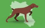 c 153x97 - La positività della sierologia per Flavivirus veicolati dai mosquitos nei cani da caccia in Campania