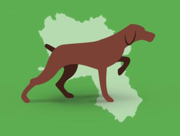 c 370x280 - La positività della sierologia per Flavivirus veicolati dai mosquitos nei cani da caccia in Campania