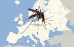 e 153x97 - Inizio anticipato della stagione di trasmissione della febbre del Nilo occidentale 2018 in Europa