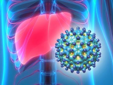 e 370x280 - Uno studio retrospettivo a livello nazionale sulla prevalenza di infezione da virus dell'epatite E nei donatori italiani