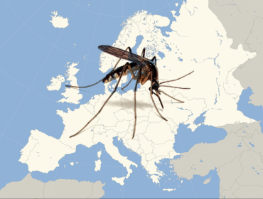 e 370x280 - Early start of the West Nile fever transmission season 2018 in Europe