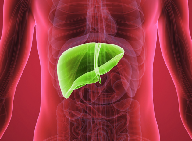 sn-liver copia